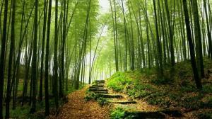 cerita motivasi-sebatang bambu